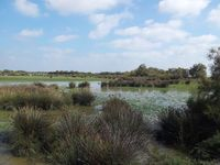 Camargue Parc naturel 2